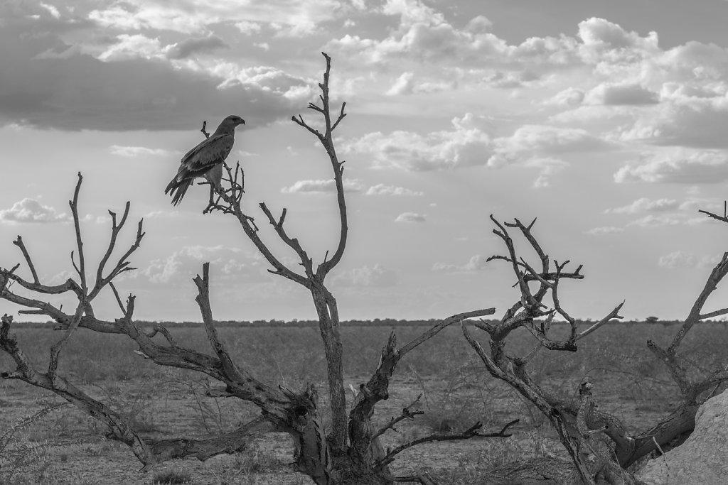Namibia 2016