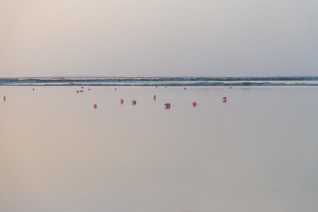 Las Coloradas, Mexiko