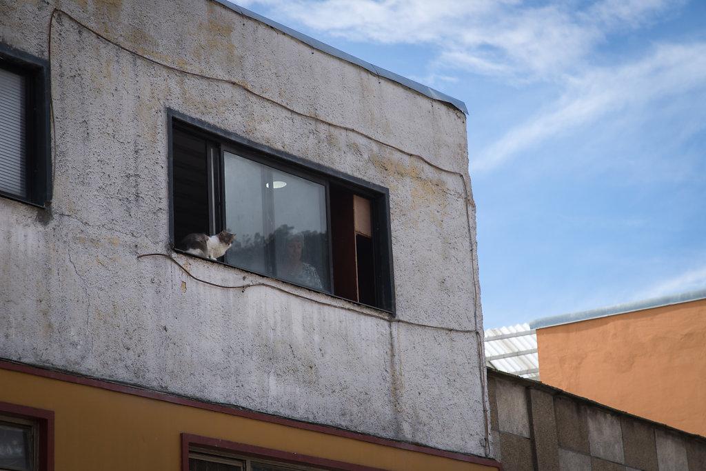 Vorsicht! Wachsamer Nachbar